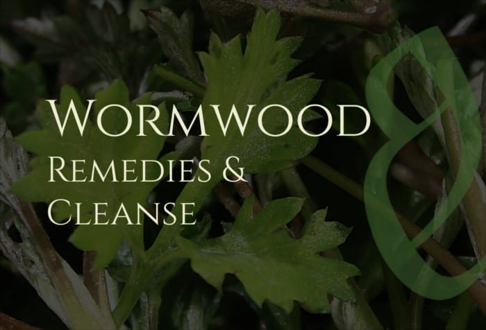 Wormwood Benefits: Remedies & Cleansing
