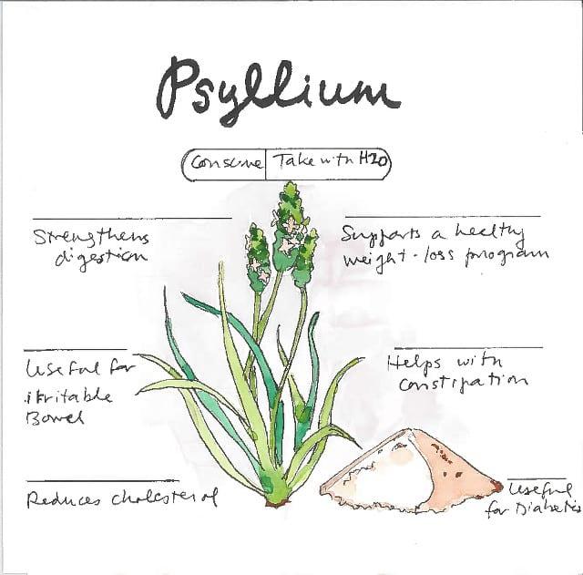 Infographic Psyllium Husk