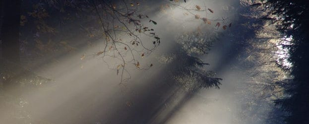 Forest scene - Healthy Hildegard