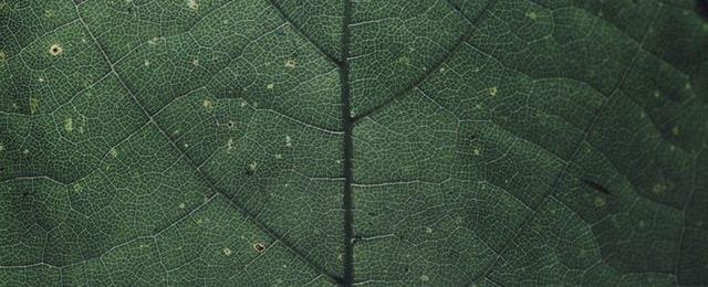 Leaf - Healthy Hildegard