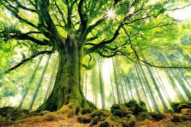 traditional german herbal medicine TREE of LIFE