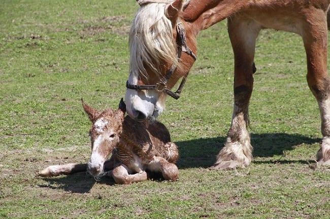 ernal equinox rebirth horse