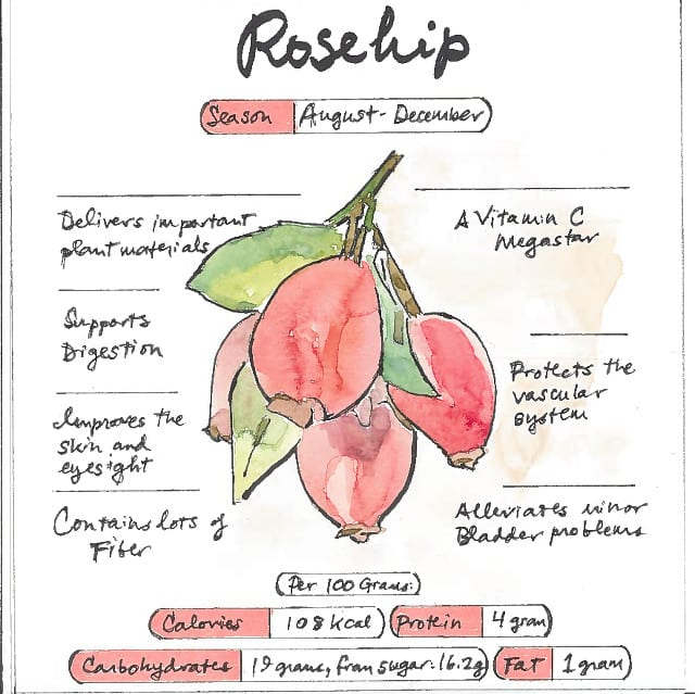 Infographic Rosehip