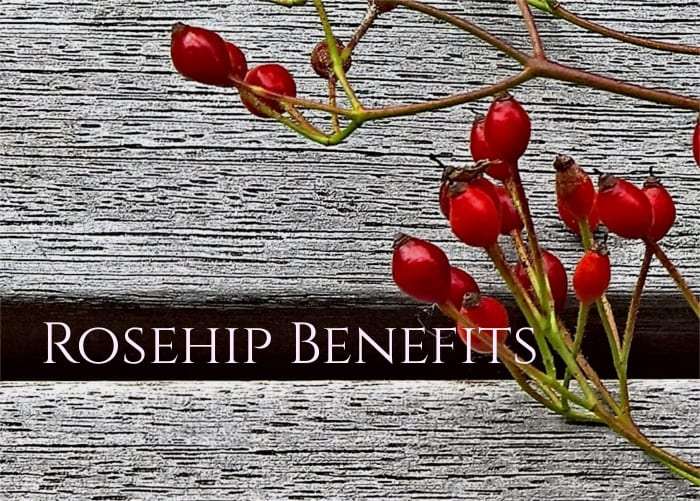 Rose Hip Benefits And Remedies Healthy Hildegard