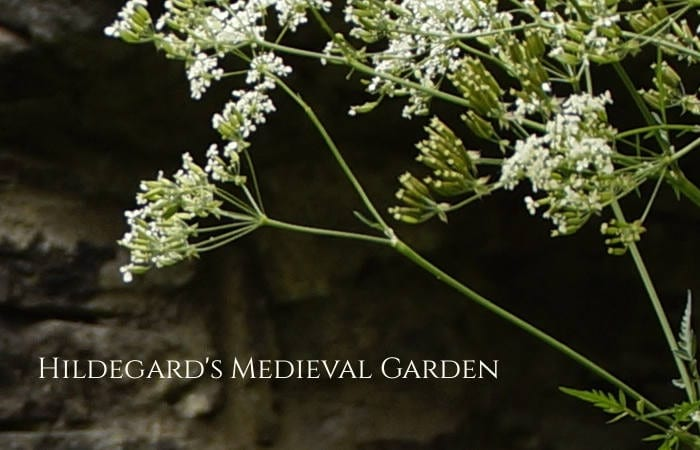 Hildegarden Medieval Garden