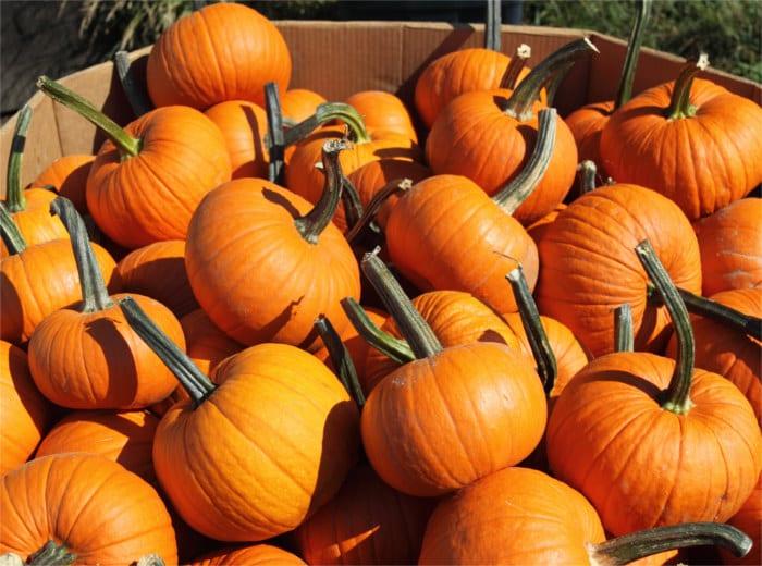 Pumpkins - Healthy Hildegard