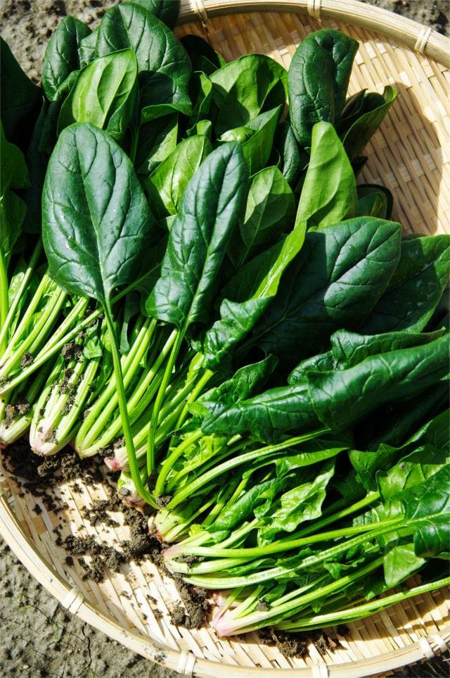 Spinach, high in Calcium, Magnesium, and Potassium