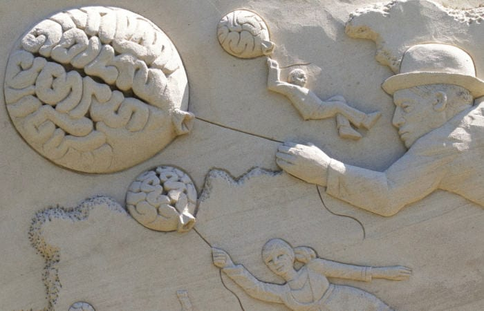 brain plasticity