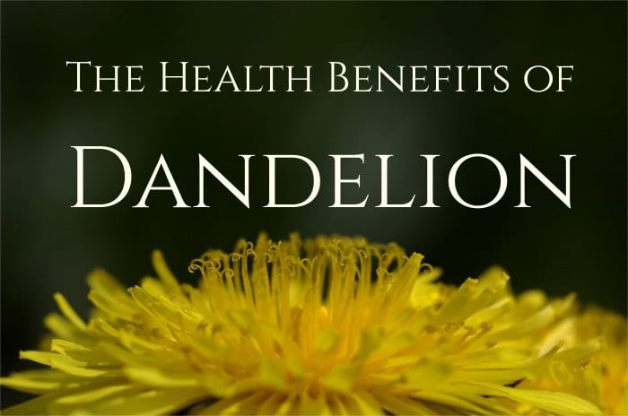 Health benefits of Dandelion 2