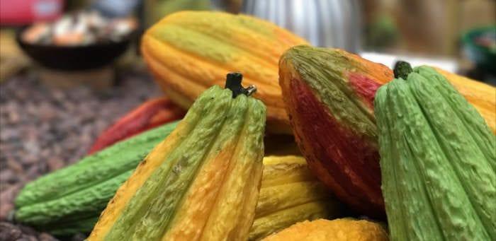 Chocolate in raw Cocoa form - Healthy Hildegard