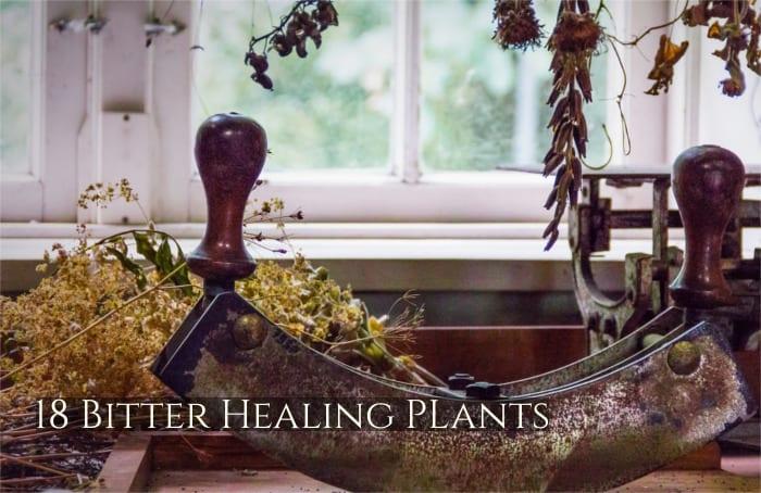 18 bitter healing plants