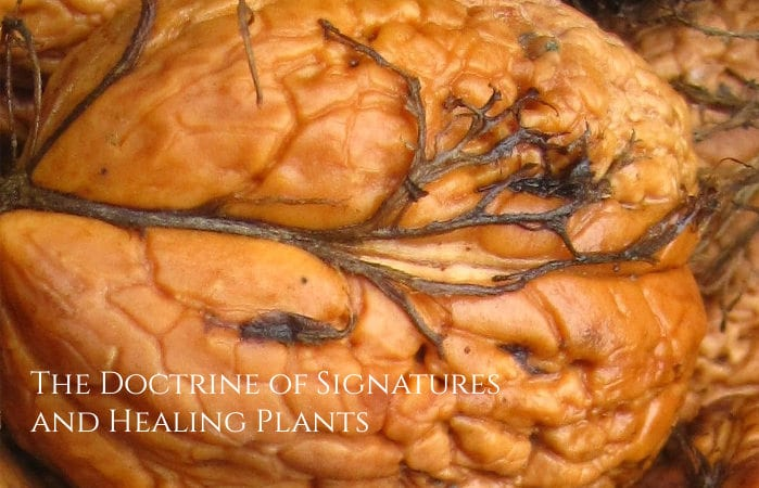 The Doctrine of Signatures and Healing Plants