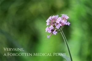 vervain health benefits