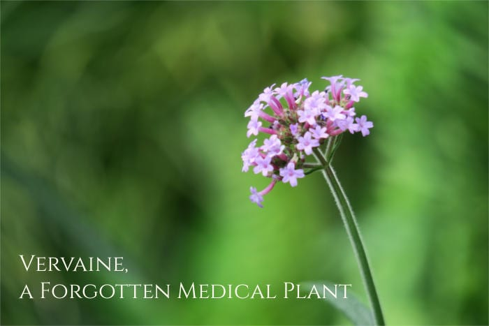 vervain health benefits