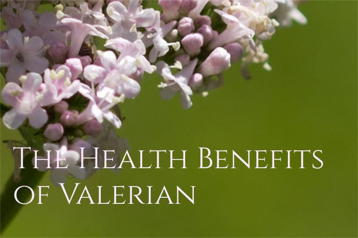 Valerian Root Health Benefits