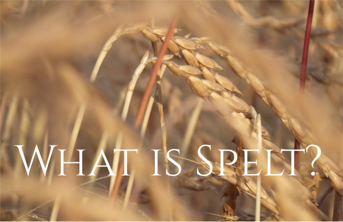 What is spelt