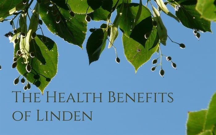 Linden Tree and Linden Tea benefits