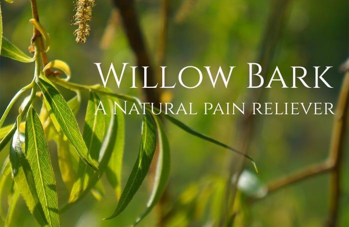 Willow bark or Aspirin? - An herbal pain reliever