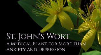 Vervain (Verbena): a forgotten medicinal herb - Healthy Hildegard