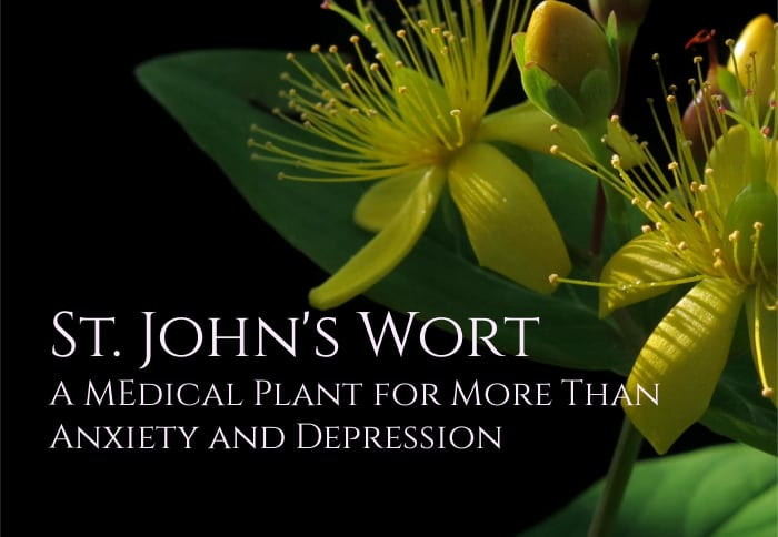 St. John' s Wort Benefits