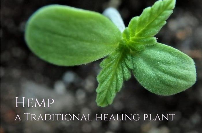 Hemp (seeds), a Culinary and Medicinal Plant According to Hildegard