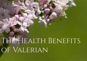 Valerian Root Health Benefits